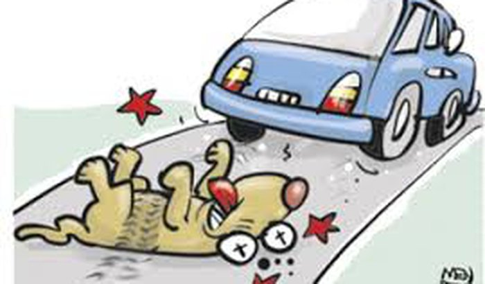 Ajude a pagar a conta do cachorrrinho!!