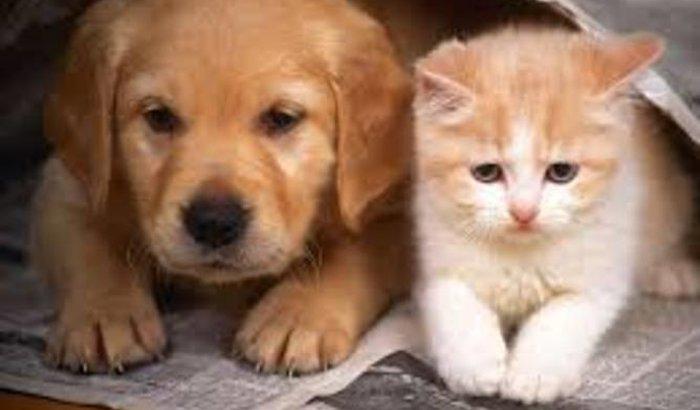 Castração de cães e gatos!