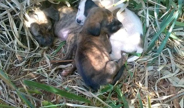 Tratamento e Hospedagem dos Cãezinhos