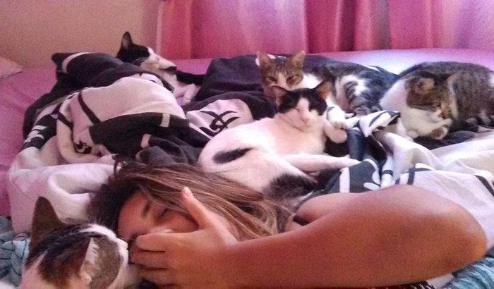 Gatil ( local com gatos)