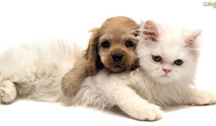 Abrigo para animais perdidos
