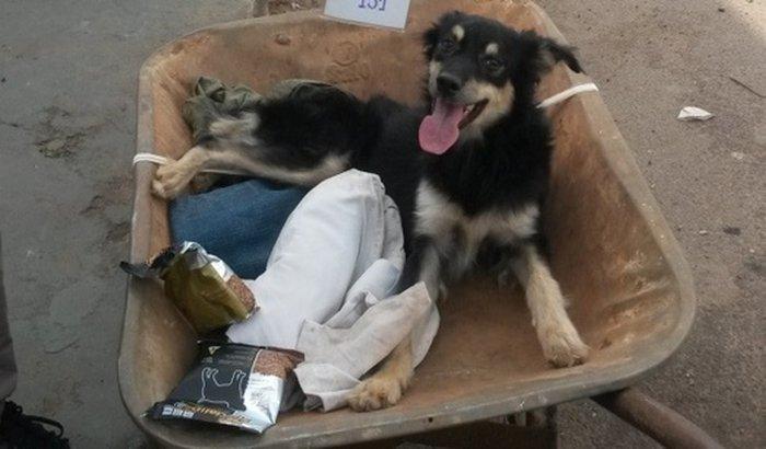 3 AÇÕES de DISTRIBUIÇÃO DE REMÉDIOS  para cães e gatos carentes de Araraquara