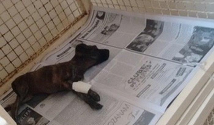 Filhote de cachorro tem edema cerebral após receber pontapés na cabeça !