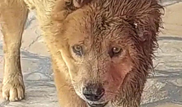 Ajuda para o Urso