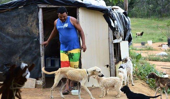 Canil, Remédios e Alimentação para cães abandonados - Monteiro