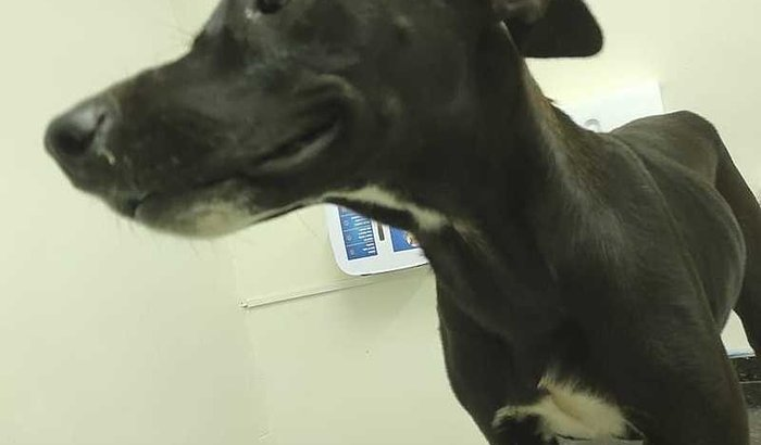 Cachorro ferido pede ajuda Veterinária  #juntospelacausaanimal