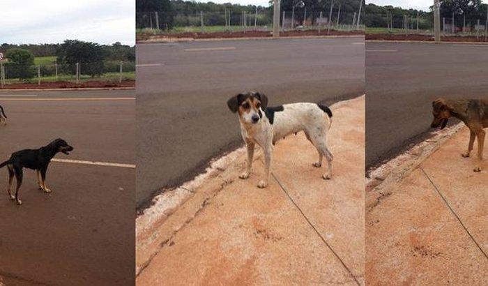 Despesas Cachorrinhas do Iguatemi!