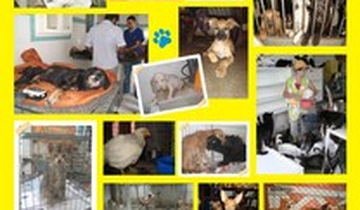 Ajudando a Todos (Abrigo para Animais)