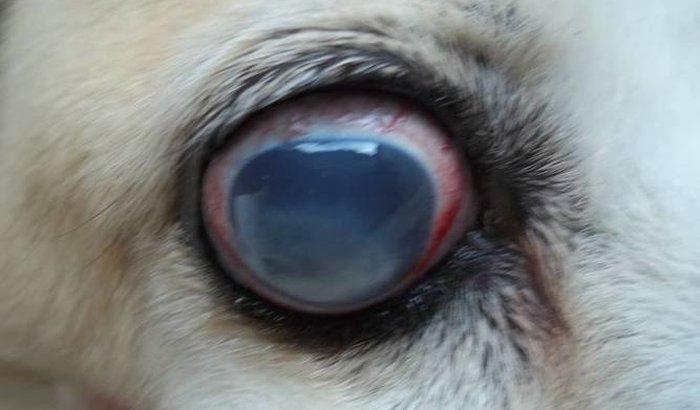Tratamento da minha cachorrinha