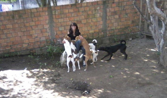 campanha pra vacina e castrar animais  de rua e muito filhotes que estão em lt