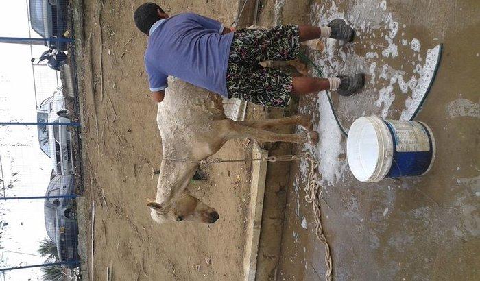 no nosso projeto tbm tem cavalo que prescisa de remedios pois foi atropelado