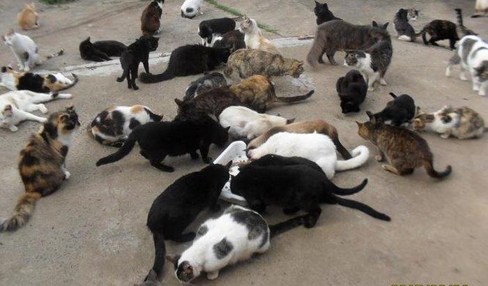 Ajuda aos Gatos
