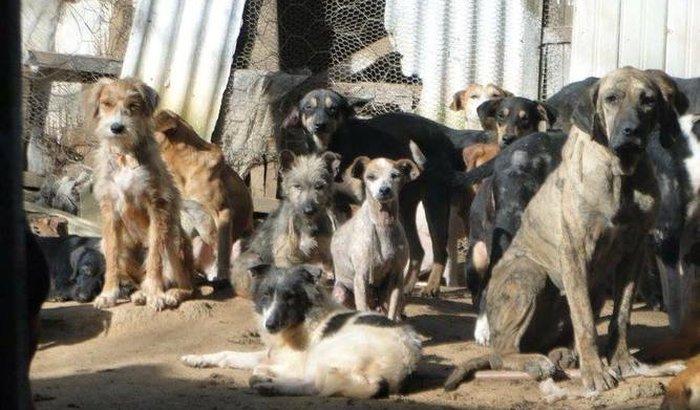 Precisamos de sua ajuda para nossos cães e gatos!!!