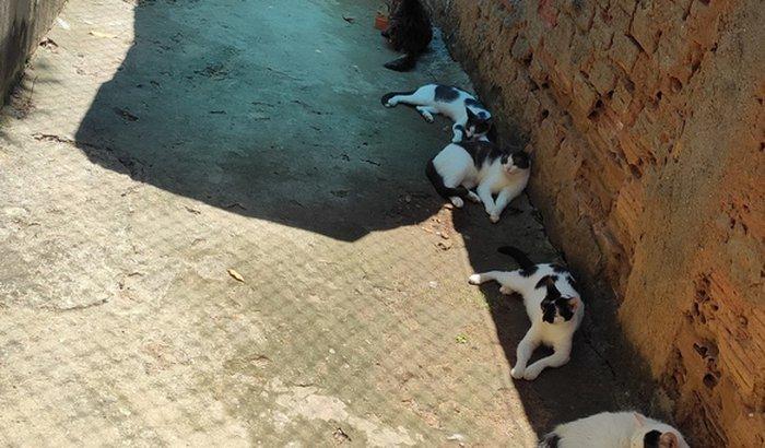 Ajudar os gatinhos a viverem mais felizes !