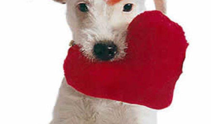 Ajuda para o pagamentos das dividas de tratamentos dos carentes auxiliados pela Bem estar animal