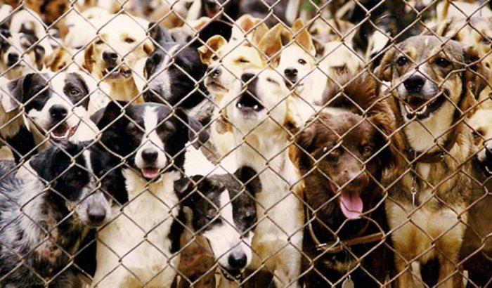 Ajuda para Construir um Lar para Cães Maltratados na Rua