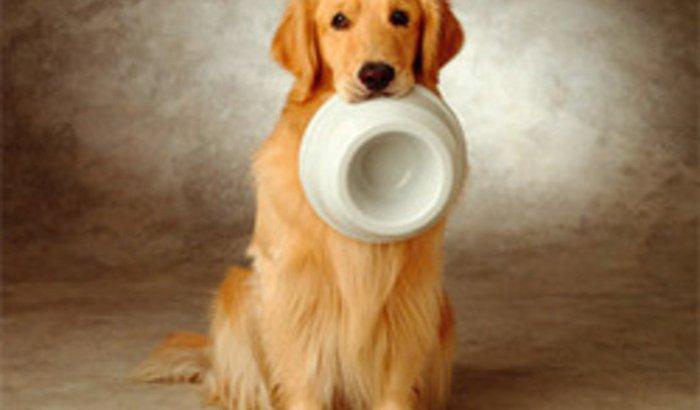 Ajuda para ONG de proteção animal