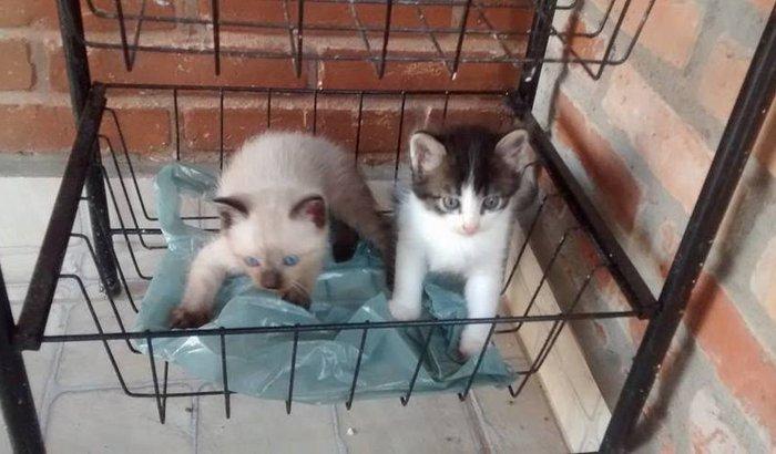 Castração de Felinos