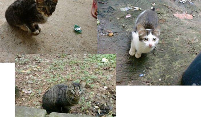 Cat&Dog Happy