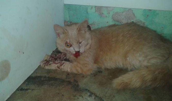 Ajuda para operar o gatinho atropelado em frente ao Hospital em Assis