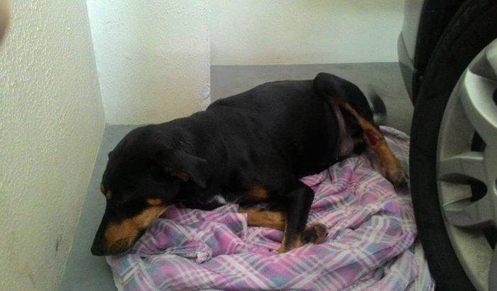 Operação Dog - Consulta