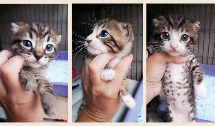 Vakinha permanente - gatinhos resgatados
