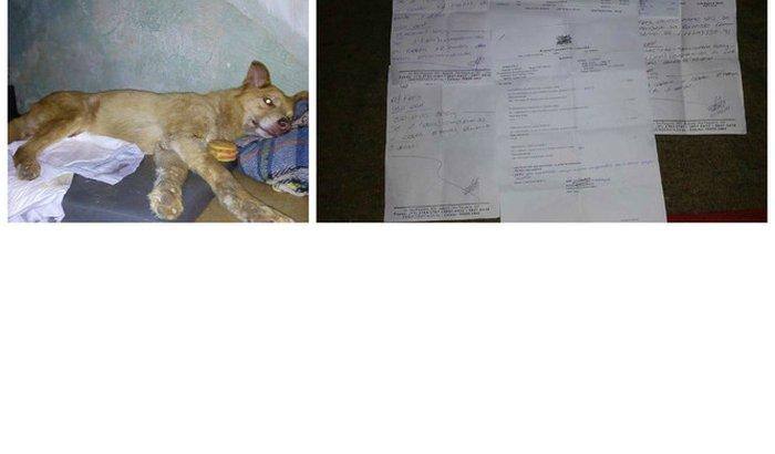 Ajuda para pagar despesas medicas veterinárias.