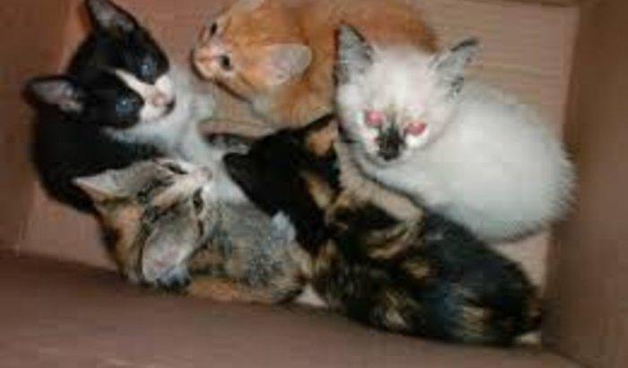 Gatinhos resgatados