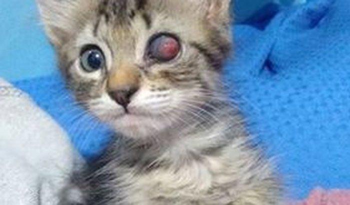 Ajuda para os 60 gatos abandonados!!