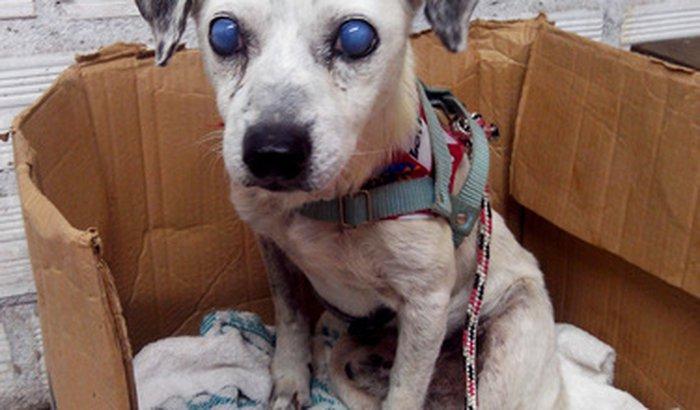 Tratamento do Pedro: nosso senhorzinho cego.