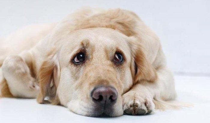Ajuda aos cães de rua ' SOS