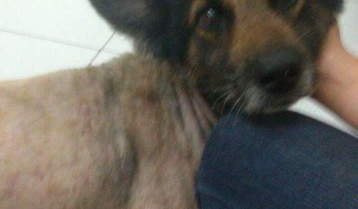 Tratamento para cachorro resgatado das ruas!