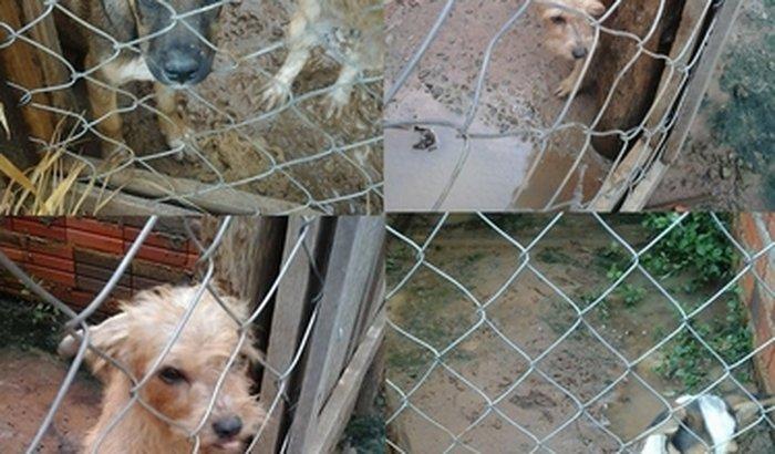 Abrigo de Cães da Tia Sueli