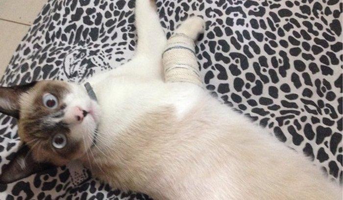 meu gato esta com a pata quebrada
