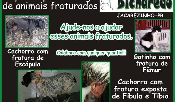 Ong Bicharedo - Animais Fraturados