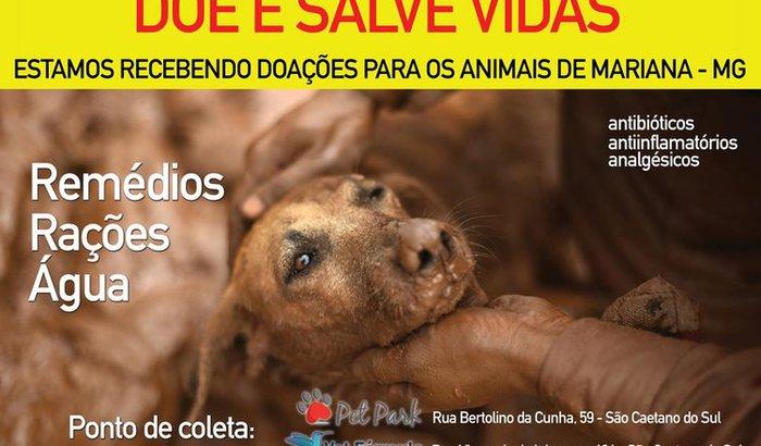 Animais de Mariana - MG