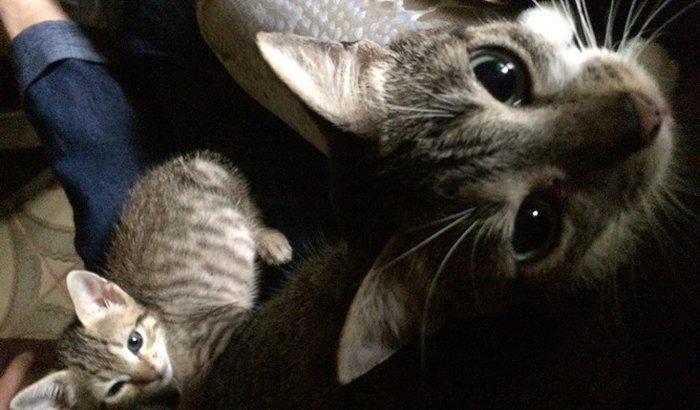 Ajuda para gatos e cachorro com itraconazol