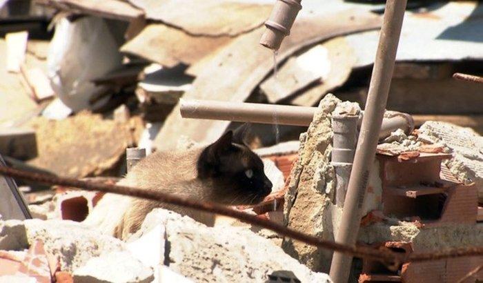 Ajude os animais abandonados