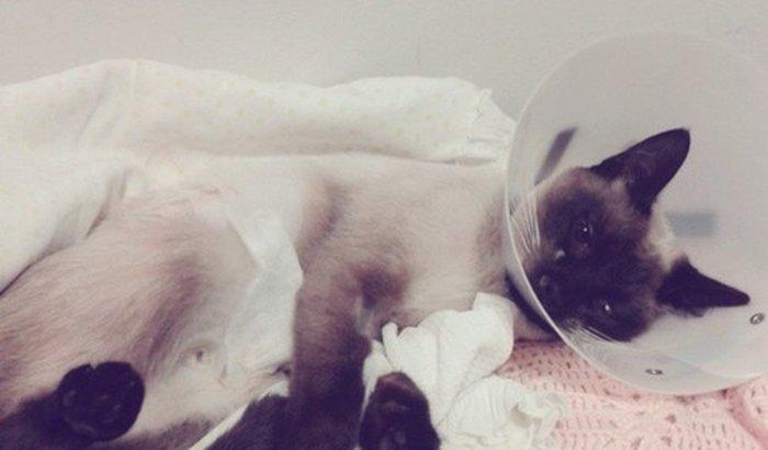 Cirurgias e tratamento pós agressão da gatinha NONAME