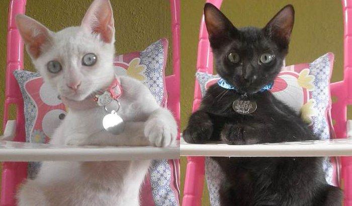 Castraçao de gatos
