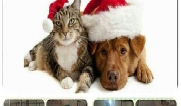 Neste Natal os animais especiais do abrigo precisam da sua ajuda