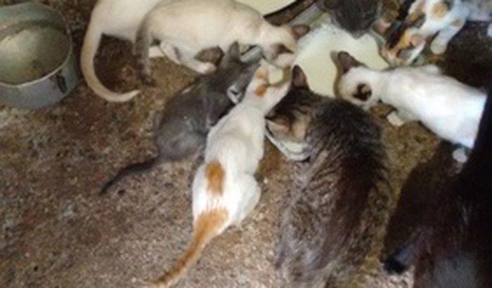 Ajuda para castrar gatos resgatados