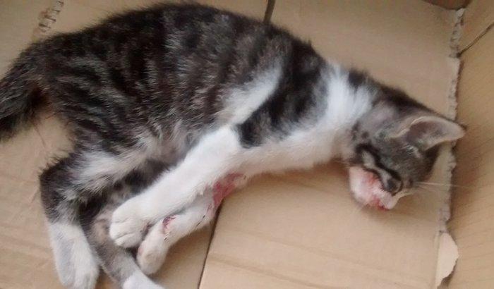 ajudar um gatinho atropelado