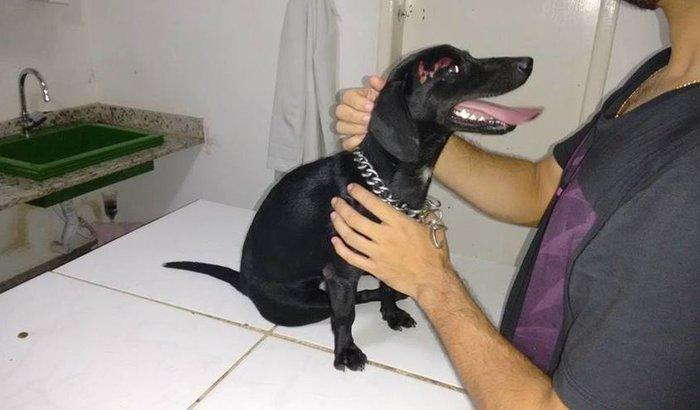 Ajuda urgente para a cadela Pretinha em Rio das Ostras