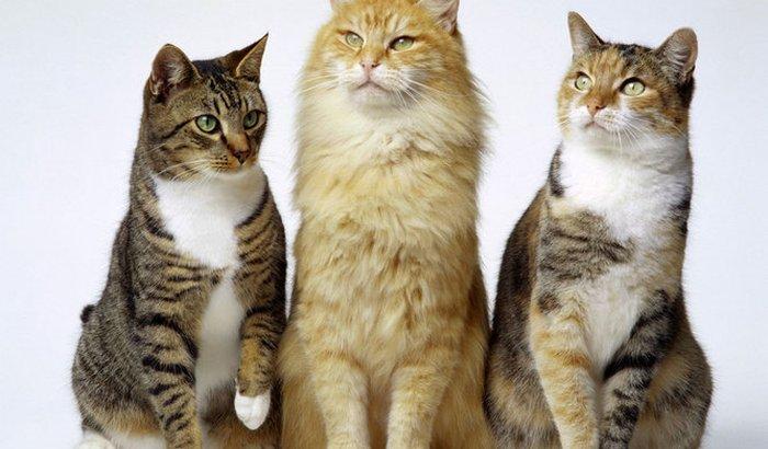 Ajuda aos gatos resgatados!