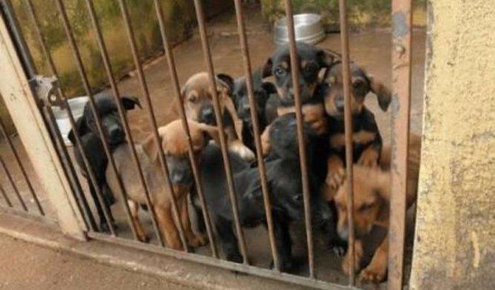 Construçao de Clínica para Animais Carentes