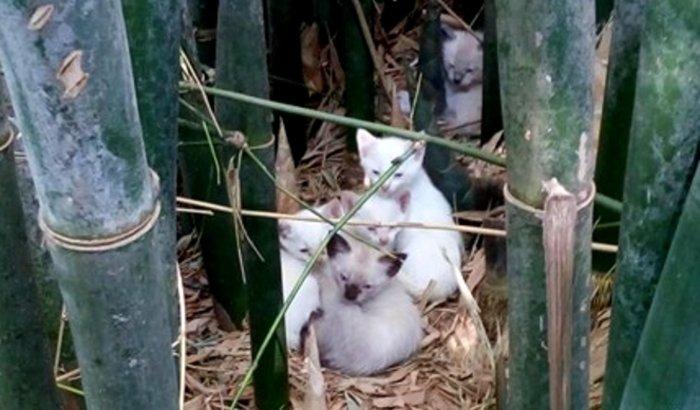 CED (Captura, Esterilização, Devolução) de 34 Gatos Abandonados