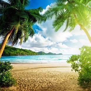 Cover painel paisagem praia coqueiros 400 x 200 multi d nq np 203525 mlb25461274818 032017 f