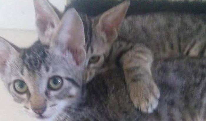 Doação para gatos