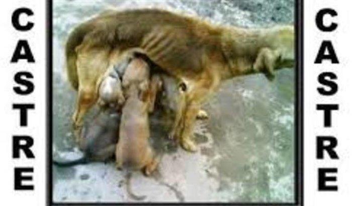 Castração de Animais em Macapá
